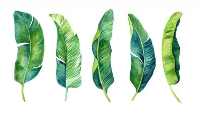 Vinilo Tropical leaves, palm leaves drawn by hand. Set of watercolor illustrations. For fabric, cards, invitations, weddings and other