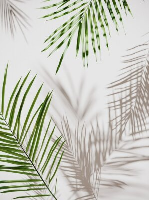 Vinilo Tropical palm green leaves on  light pastel background. Unobtrusive botanical background with shadow on the wall - trend frame, cover, card, postcard, graphic design - 3D, render, illustration.