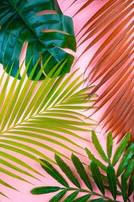 Vinilo tropical palm leaf pink sweet background
