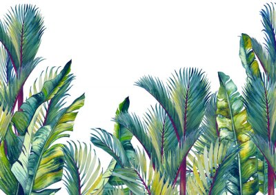 Vinilo Tropical palm trees and banana leaves. Isolated watercolor background.