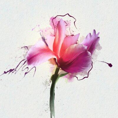 Vinilo Tulipán hermoso brillante en un fondo blanco. Un género de herbáceas herbáceas perennes de la familia Lily