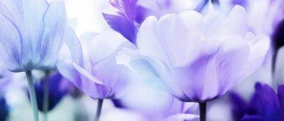 Vinilo tulipanes cyan violet ultra light