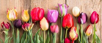 Vinilo tulipanes multicolores sobre un fondo de madera, banner, tablas viejas, flores de primavera, tulipanes en los tableros