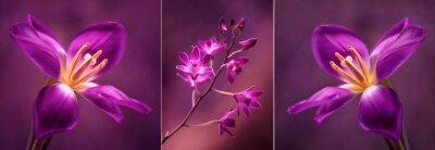 Vinilo Tulipany i Orchidea