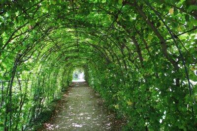Vinilo Túnel verde en el jardín