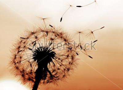 Vinilo Un servido de león soplando semillas en el viento.