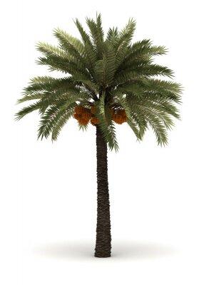 Vinilo Un solo árbol de Palm