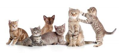 Vinilo Varios gatos aislado grupo