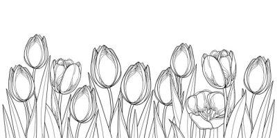 Vinilo Vector el borde horizontal con las flores del tulipán del esquema, el brote y las hojas adornadas en negro aisladas en el fondo blanco. Tulipanes de contorno para el diseño de la primavera de felicita