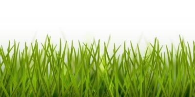 Vinilo Vector realista borde o marco de hierba verde transparente aislado sobre fondo blanco - naturaleza, ecología, medio ambiente, plantilla de jardinería