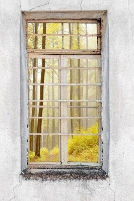 Vinilo Ventana de la antigua casa de cemento con vista al bosque