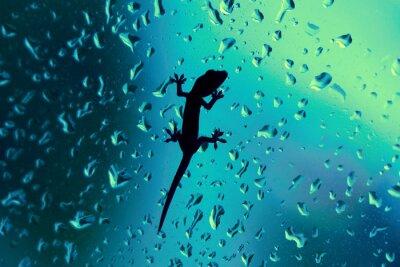 Vinilo Ventana Gecko sobre el vidrio mojado con gotas de lluvia
