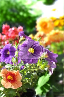 Vinilo verano
