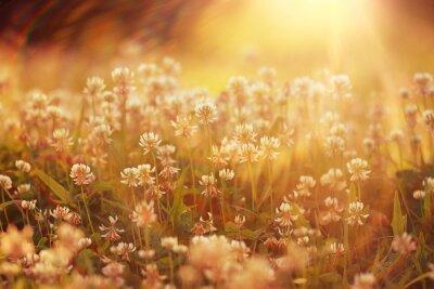 Vinilo verano flores fondo del paisaje de sol Rayos