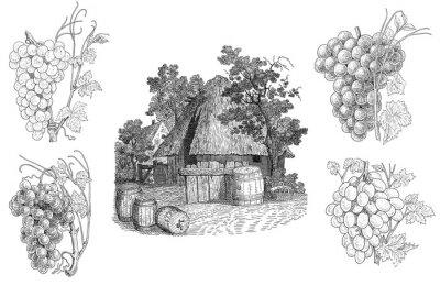Vinilo Viñedo ilustración
