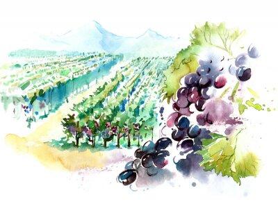 Vinilo viñedos
