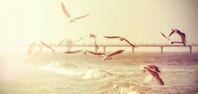 Vinilo Vintage retro stylized photo of a seagulls, old film effect.