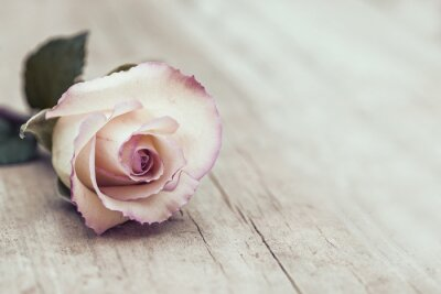 Vinilo Vintage Rose