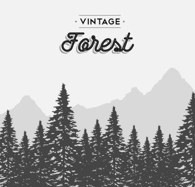 Vinilo Vintage selva etiqueta de texto en el paisaje de árboles de invierno