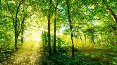 Vinilo Wald Panorama im goldenen Sonnenschein