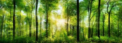 Vinilo Wald Panorama mit Sonnenstrahlen