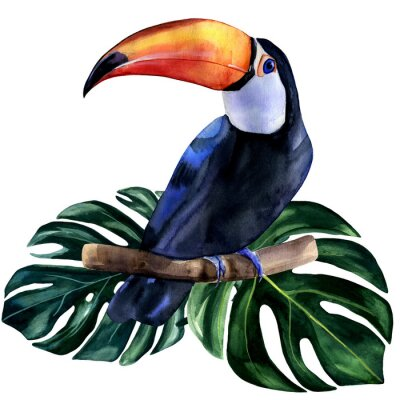 Vinilo Watercolor hand painted colorful realistic illustration of toucan bird with monstera leaves. Bright tropical composition is perfect for invitation for thematic wedding or party.