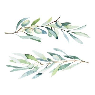 Vinilo Watercolor olive branch. Sketch of olive branch on white background