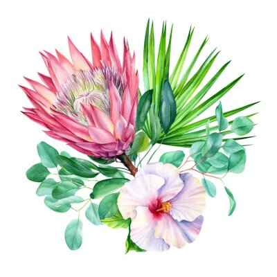 Vinilo Watercolor protea flower, isolated on white background. Botanical illustration. Hand painted watercolor.