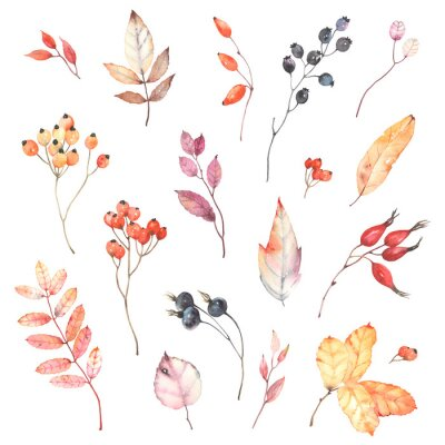 Vinilo Watercolor set of branches with berries dog rose, rowan and colorful leaves. Autumn illustration isolated on white background, decoration collection for your design.