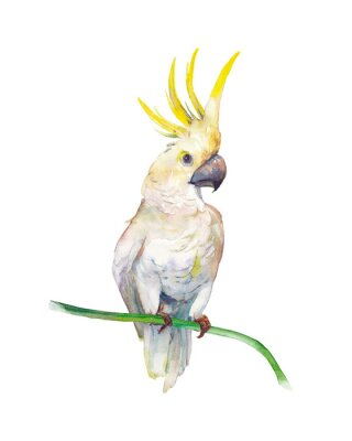 Vinilo Watercolor tropic bird: yellow crested cockatoo. Single parrot on white background. Natural illustration