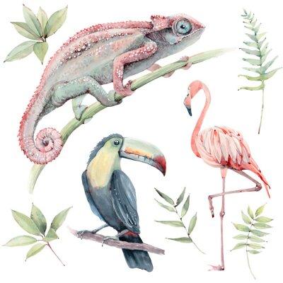 Vinilo watercolor tropical animals set.