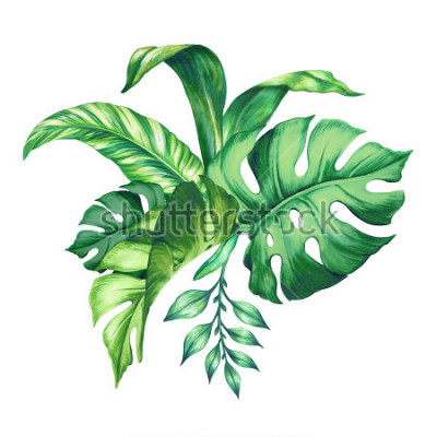 Vinilo watercolor tropical green leaves, isolated on white background