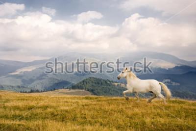 Vinilo White horse
