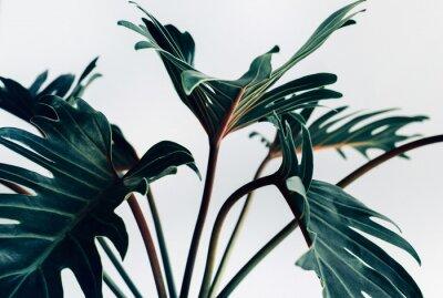 Vinilo Xanadu tropical exótico se va en los conceptos blancos de background.nature