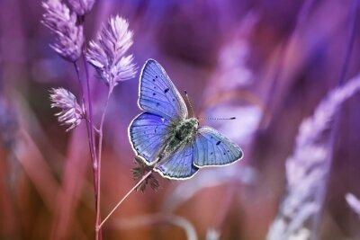 Vinilo Маленькая бабочка среди травы в сиреневых тонах