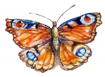 Vinilo Бабочка акварель, графика, насекомое, рисунок,