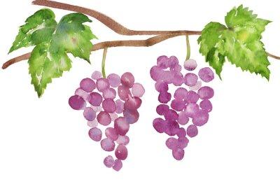 Vinilo ぶどう の 水彩 イラスト