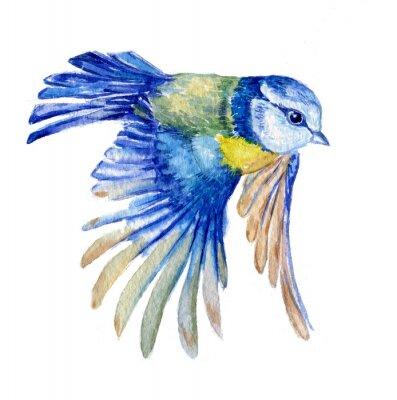 Vinilo птица синица