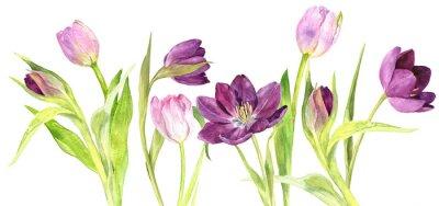 Vinilo Tulipanes púrpuras y rosados de la acuarela